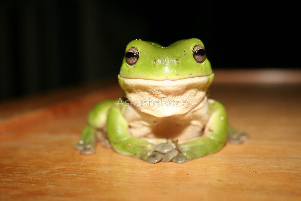 Just Another Froggy by Kylie  Metz