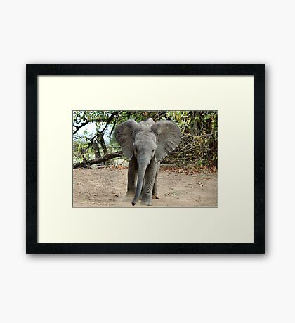 DON'T COME ANY CLOSER! -THE AFRICAN ELEPHANT – Loxodonta Africana Framed Print