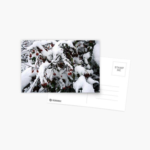 Snow N Berries 1 Postkarte