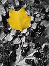 Fallen by Chelsea Kerwath