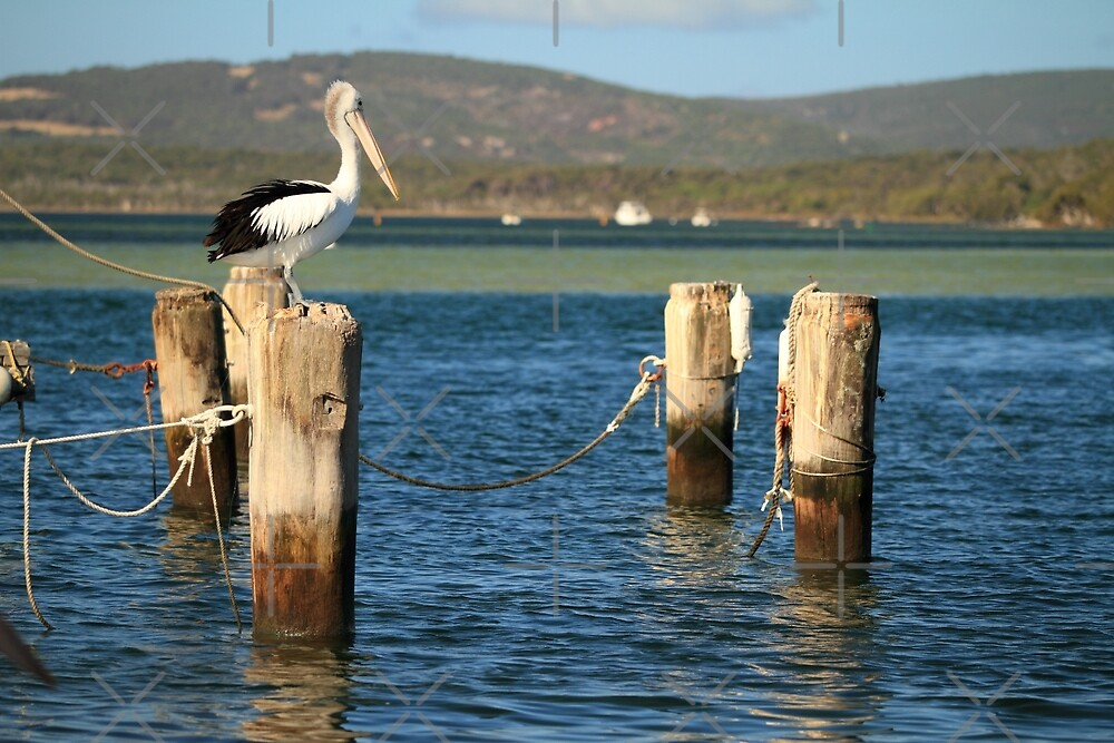 Pelican Posts by Elaine Teague