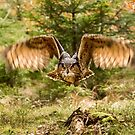 Woodland flight by Dave Hare