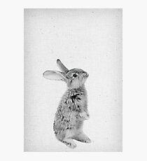 Rabbit 11 Fotodruck