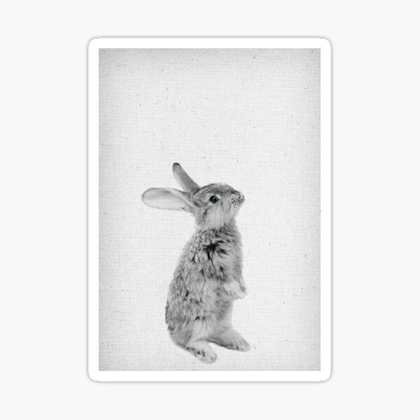 Rabbit 11 Sticker