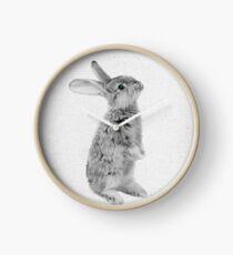 Rabbit 11 Uhr