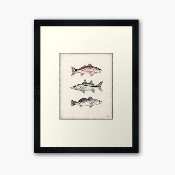 """Inshore Slam""  by Amber Marine ~ watercolor redfish, snook, and trout art, © 2013 Framed Art Print"