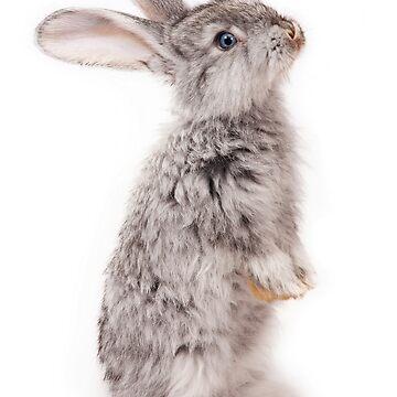 Rabbit 12 von froileinjuno