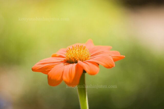 macro 5 by redleafphotography