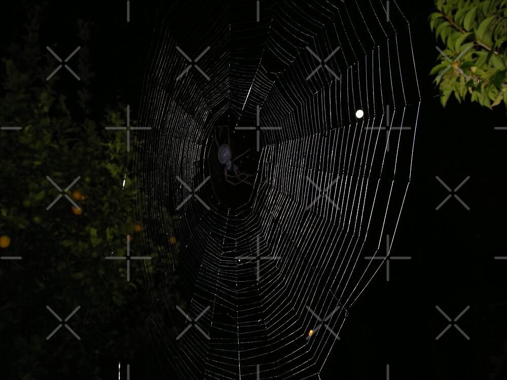 Night Hunting by Sandra Chung
