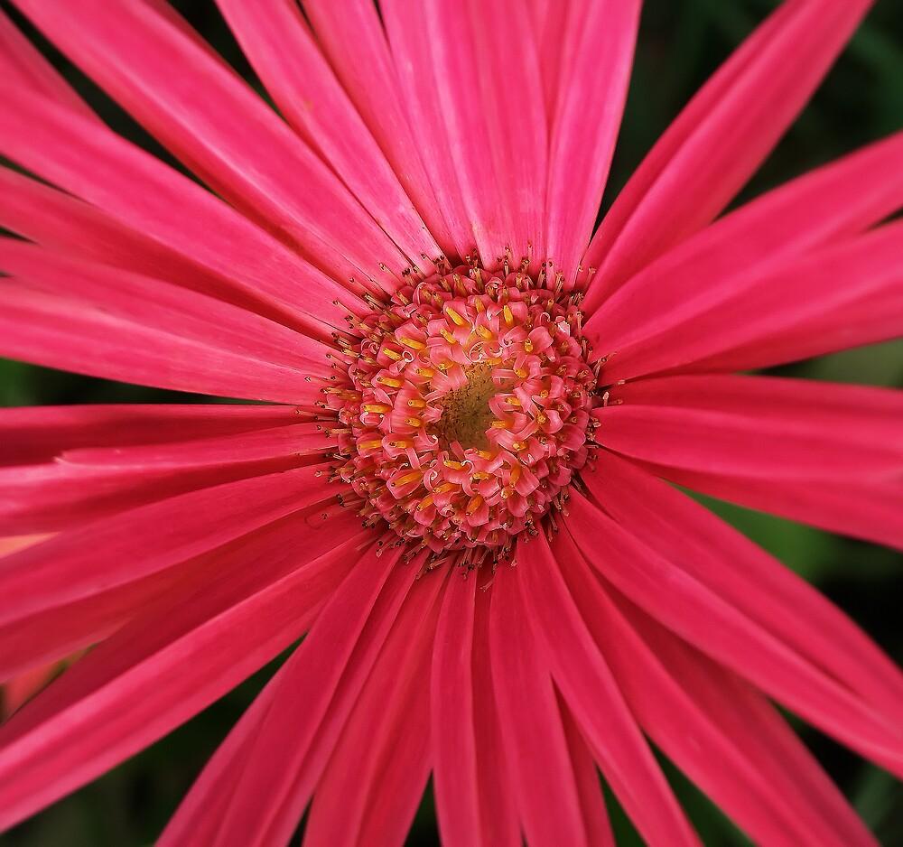 Pink Flower by David James