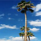 5 TALL PALMS by WhiteDove Studio kj gordon