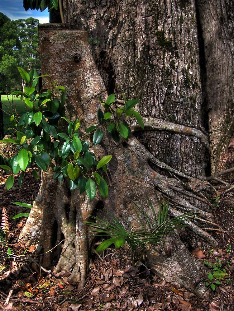 Tree stump by David James