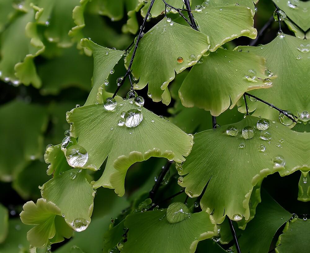 Water Drops by David James