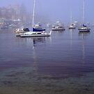 Foggy Morning by Sara Lamond