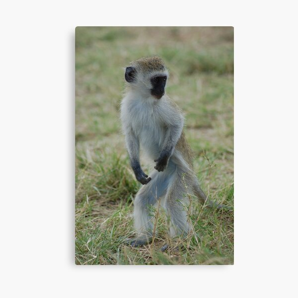 Dancing Monkey Canvas Print