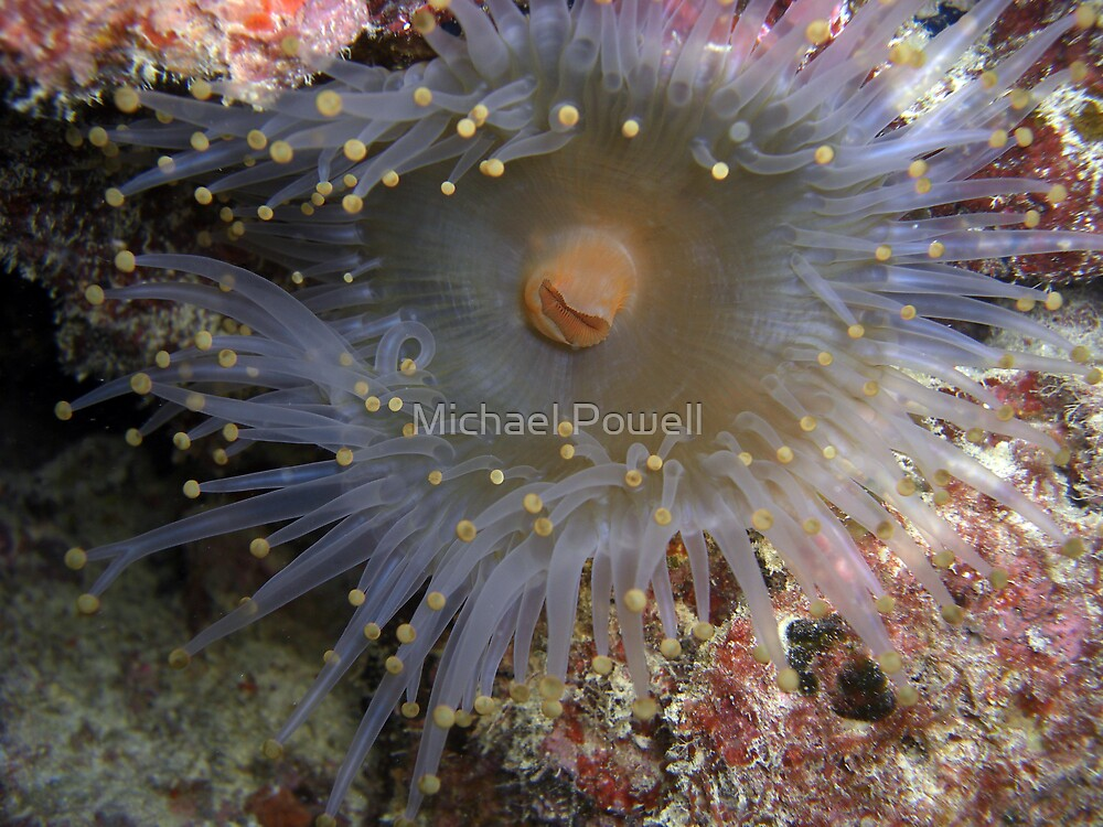 Hydra, Anenome?....Okay I give up... by Michael Powell