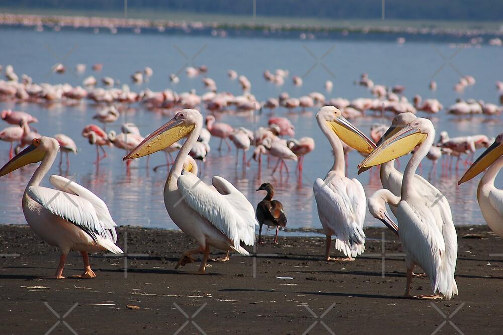 Pelicanos by ApeArt