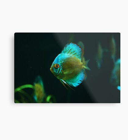 A fish 1 Metal Print