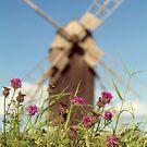 Olandia by Dominika Aniola