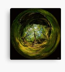Ness Glen, Mystical Irish Wood Canvas Print