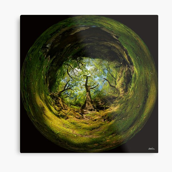 Ness Glen, Mystical Irish Wood Metal Print