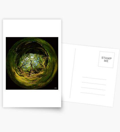 Ness Glen, Mystical Irish Wood Greeting Card