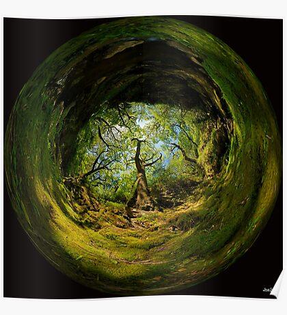 Ness Glen, Mystical Irish Wood Poster