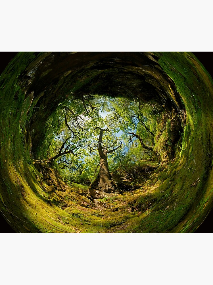 Ness Glen, Mystical Irish Wood by VeryIreland