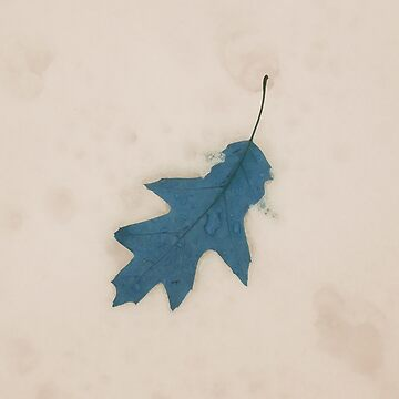Leaf in the snow by vampyba