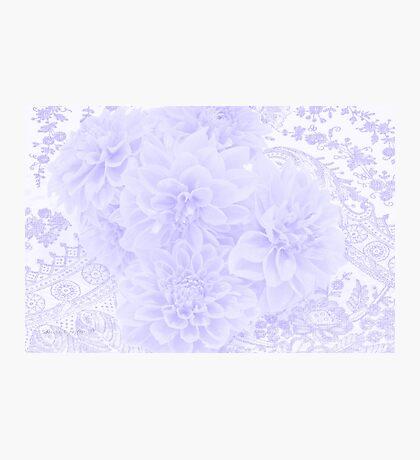 Dahlias In Soft Blue Photographic Print