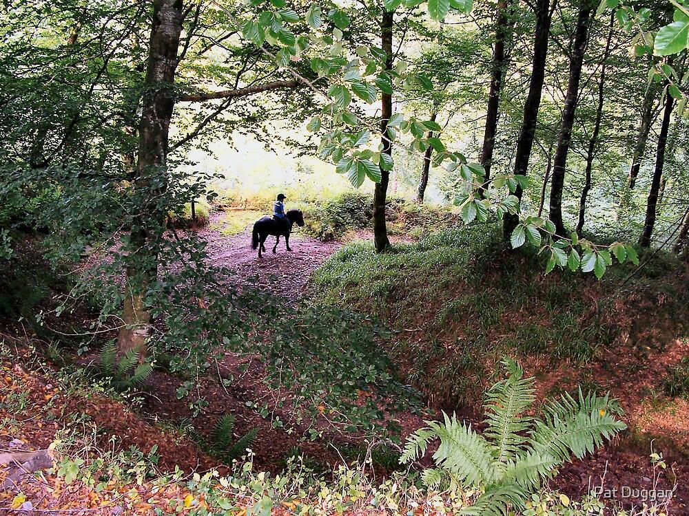 Through The Woods by Pat Duggan