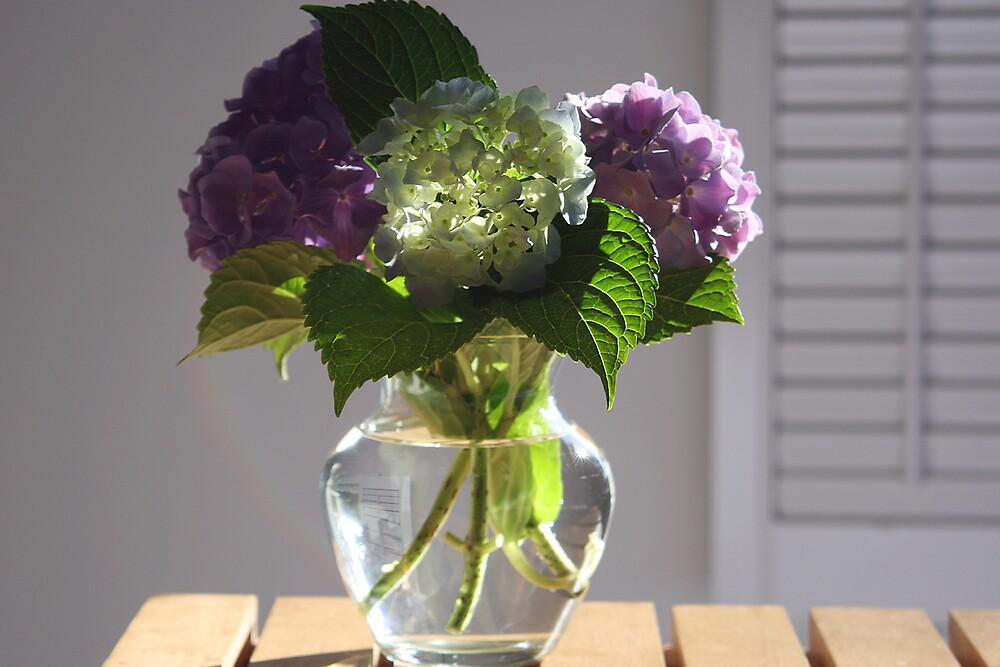 hydrangea in glass vase in the morning light. by Marcia Luly