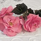 Pink Begonias And Their Leaves by Sandra Foster