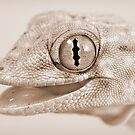 Gecko in high-key by blepharopsis