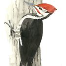 Pileated Woodpecker - Watercolor by skidgelstudios