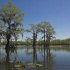 Caddo Lake, Texas by Tamas Bakos