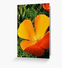 California Poppy, macro Greeting Card