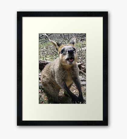 Wallaby Kisses Framed Print
