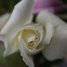 JUST ROSES by Dana Yoachum