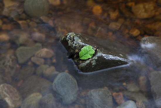 leaves that are green by codaimages
