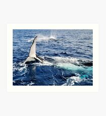 A Whale Of A Time Art Print