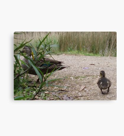 Mother Duck, Wait Wait Canvas Print