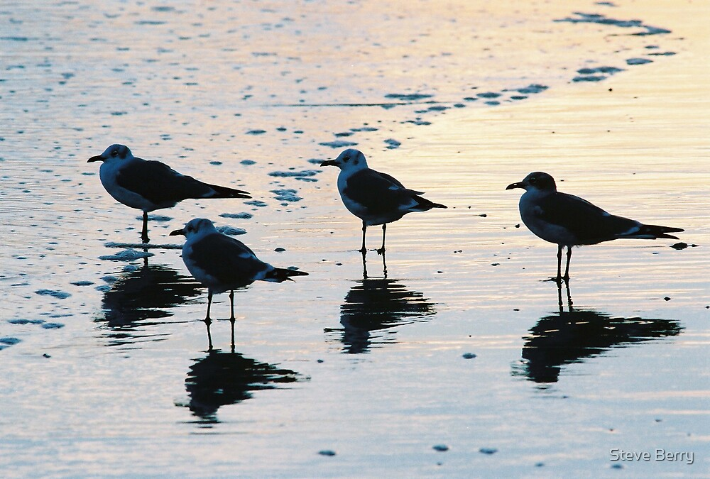 4 Seagulls by Steve Berry