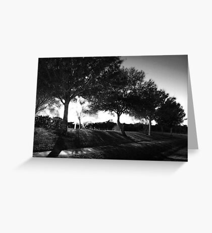 Night Trees Greeting Card