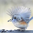 Feathered Fan... by Laurie Minor