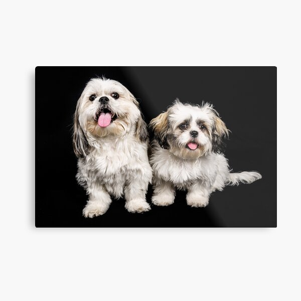 Timmy and Biscuit Metal Print