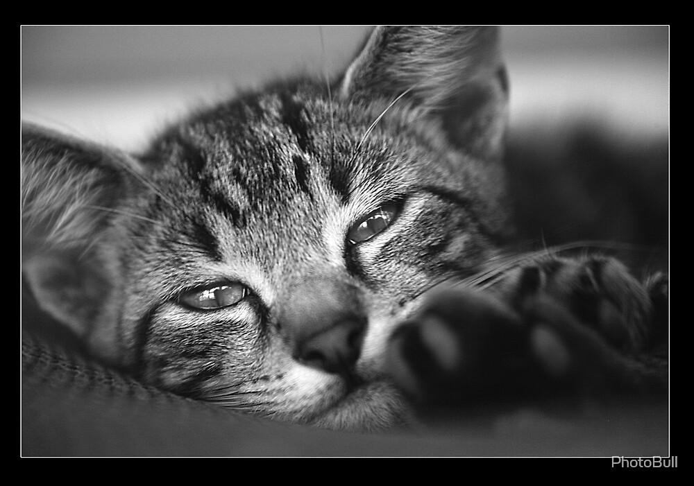 Simba The Cat by PhotoBull