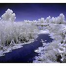 Fivebough Swamp by Aaron .
