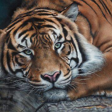 'Sumatran Tiger - Intensity' by MCColyer
