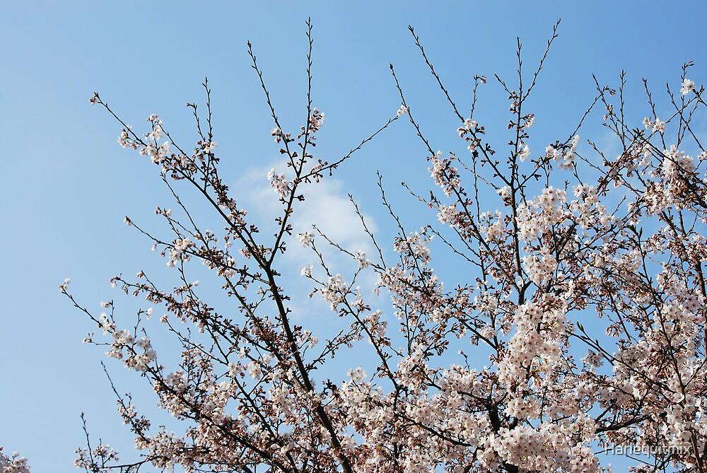 Sakura Sky by Harlequitmix